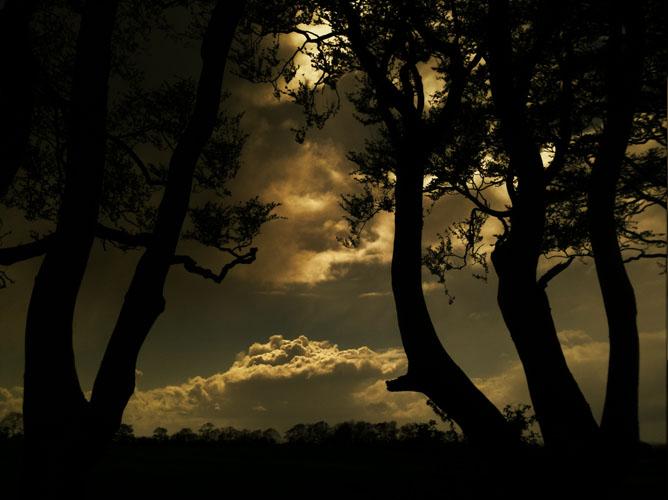 Irish landscape photograph of The Dark Hedges, Stranocum, Northern Ireland photo 2389 photo icon.