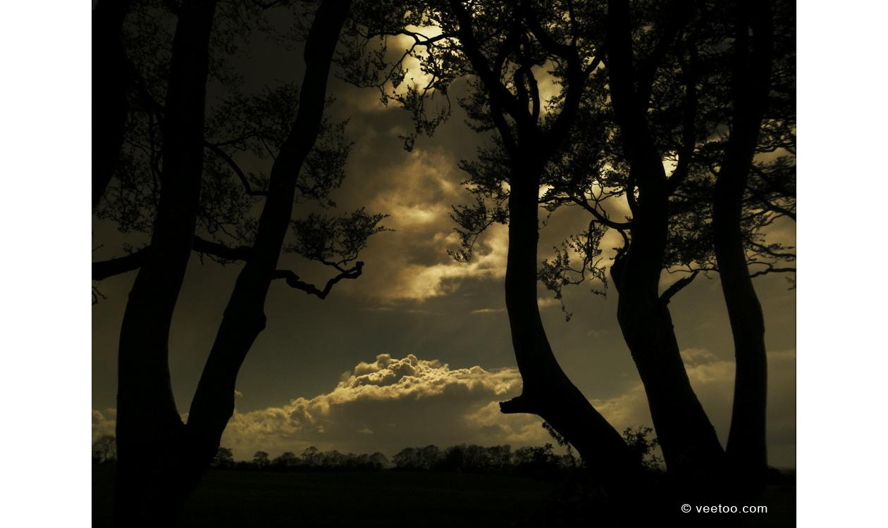 Irish landscape photograph of The Dark Hedges, Northern Ireland.
